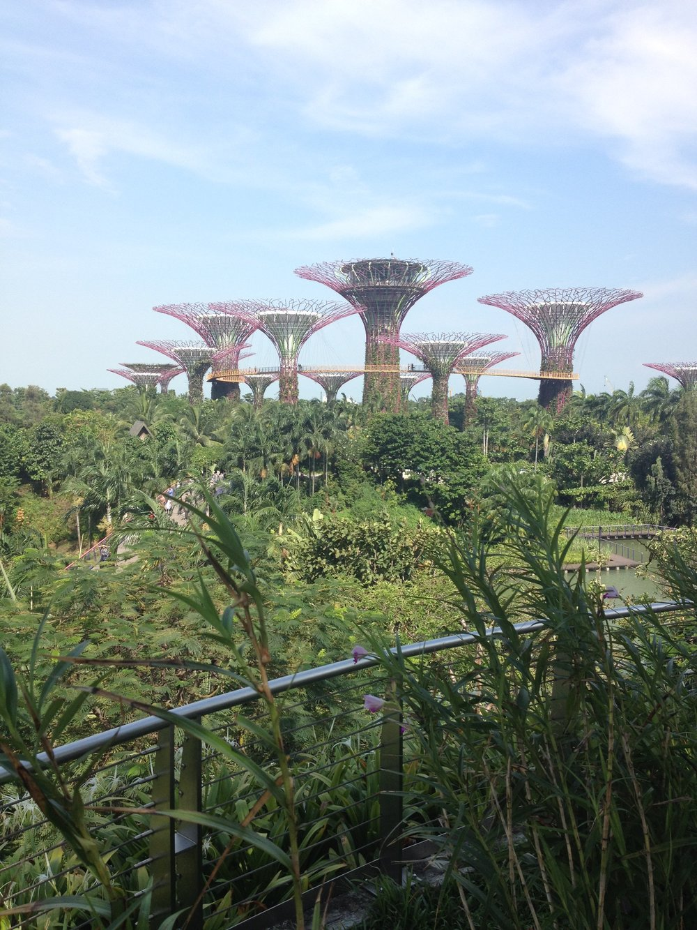 Supretrees Gardens by the Bay Singapore