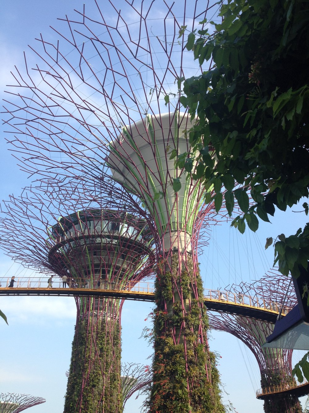 Supertrees Singapore skyway skywalk