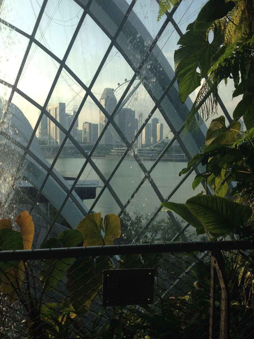 Gardens by the Bay Cloud Forest Singapore
