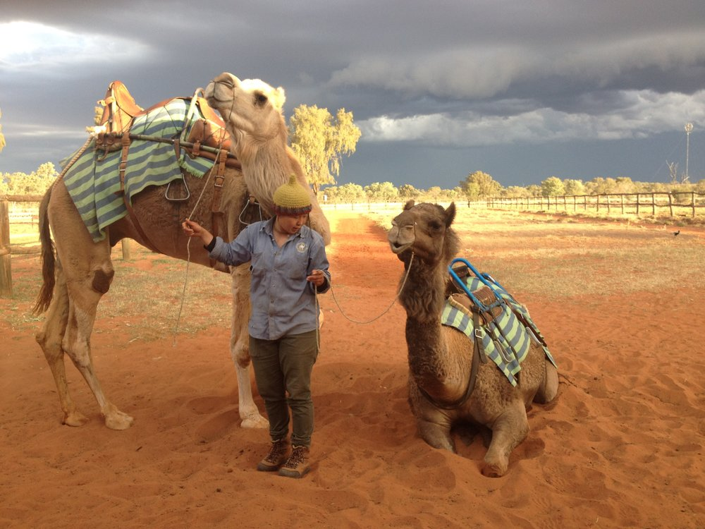 Camels Northern Territory Australia