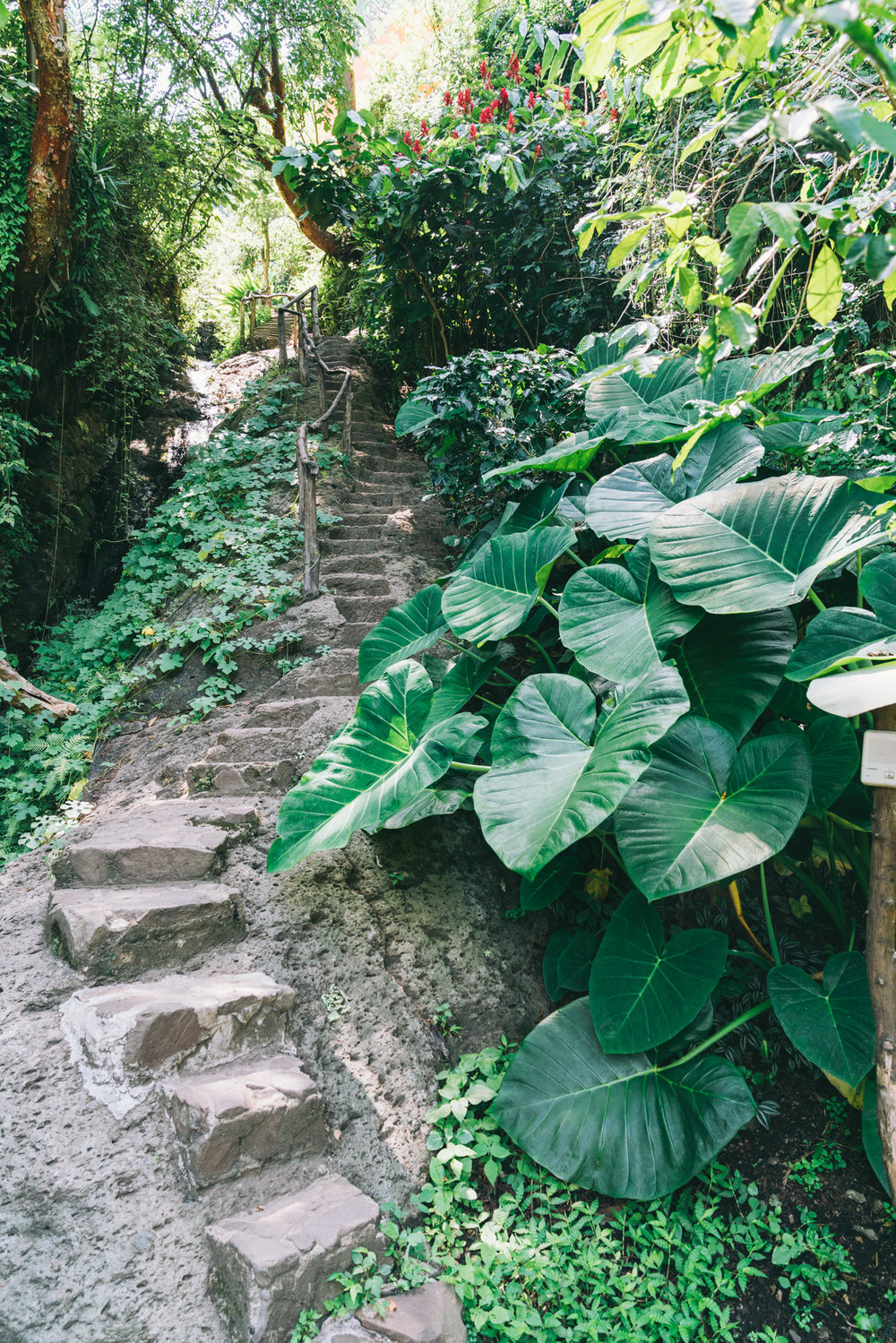Stairs up to the Yoga Forest