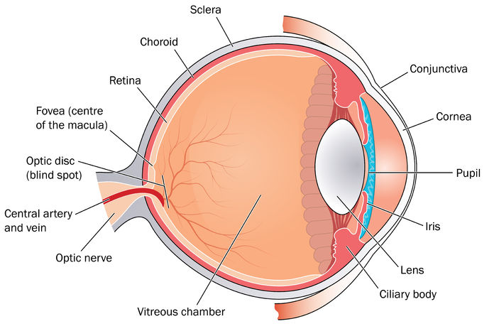 Retinal Clinic — Kingston Medical Centre