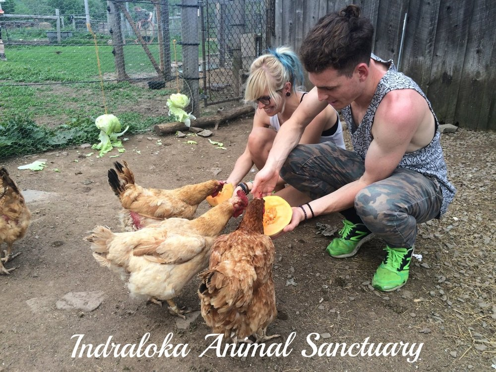 "Many Thanks to Our Sponsor - Cornstock is thrilled to have the support of Indraloka Animal Sanctuary. Indraloka provides ""heaven on earth"" for farm animals that have nowhere else to turn. We inform, inspire, and empower the community, especially children, on ways in which we can better care for ourselves and the environment while helping animals in need. We advocate for a kind and compassionate diet that protects animals, the earth, and our own health. http://indraloka.org"