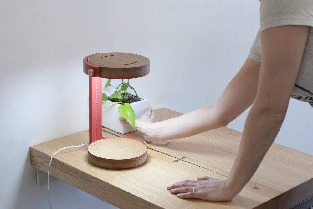 Perk Lamp