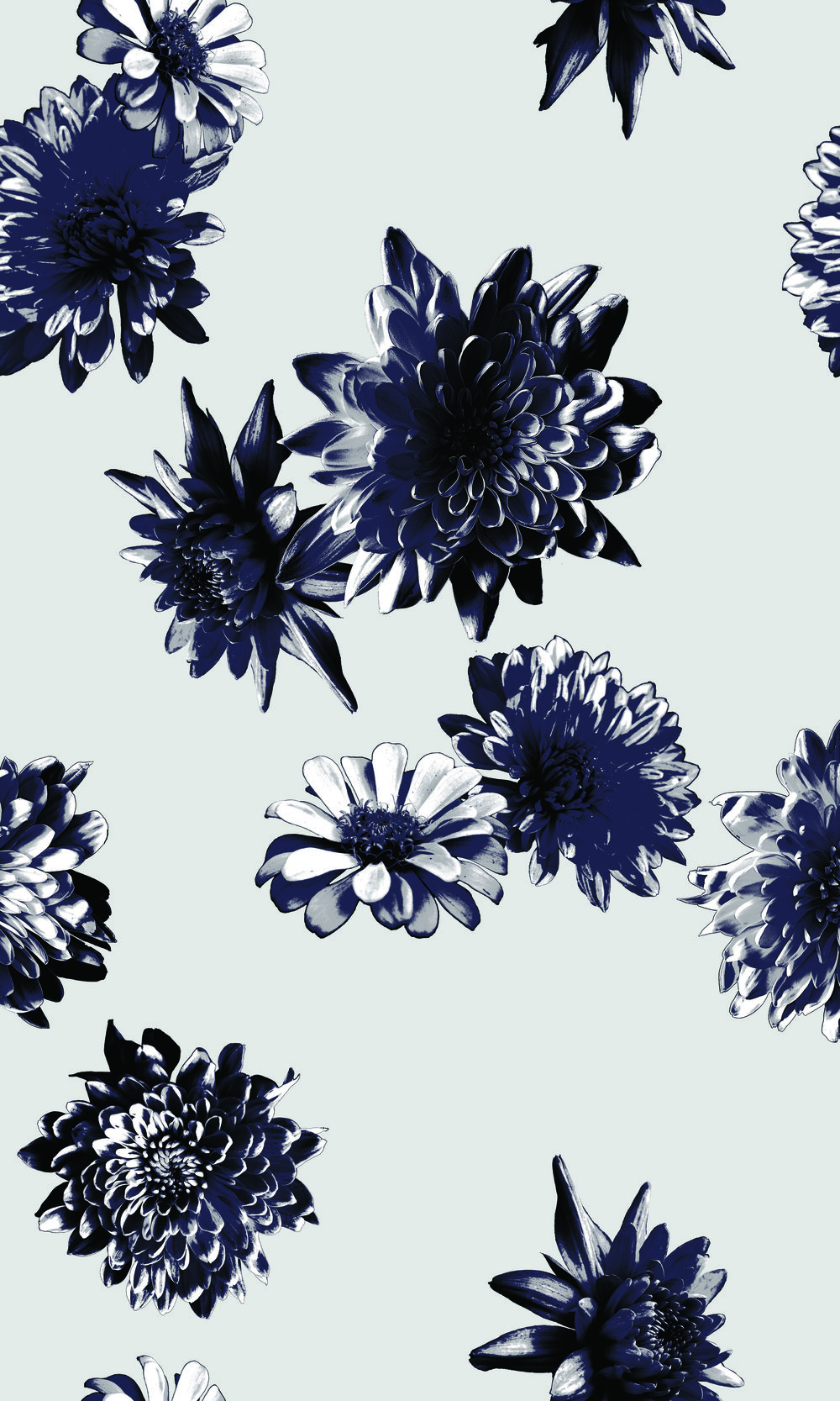 chrysanthemumScatter1.jpg