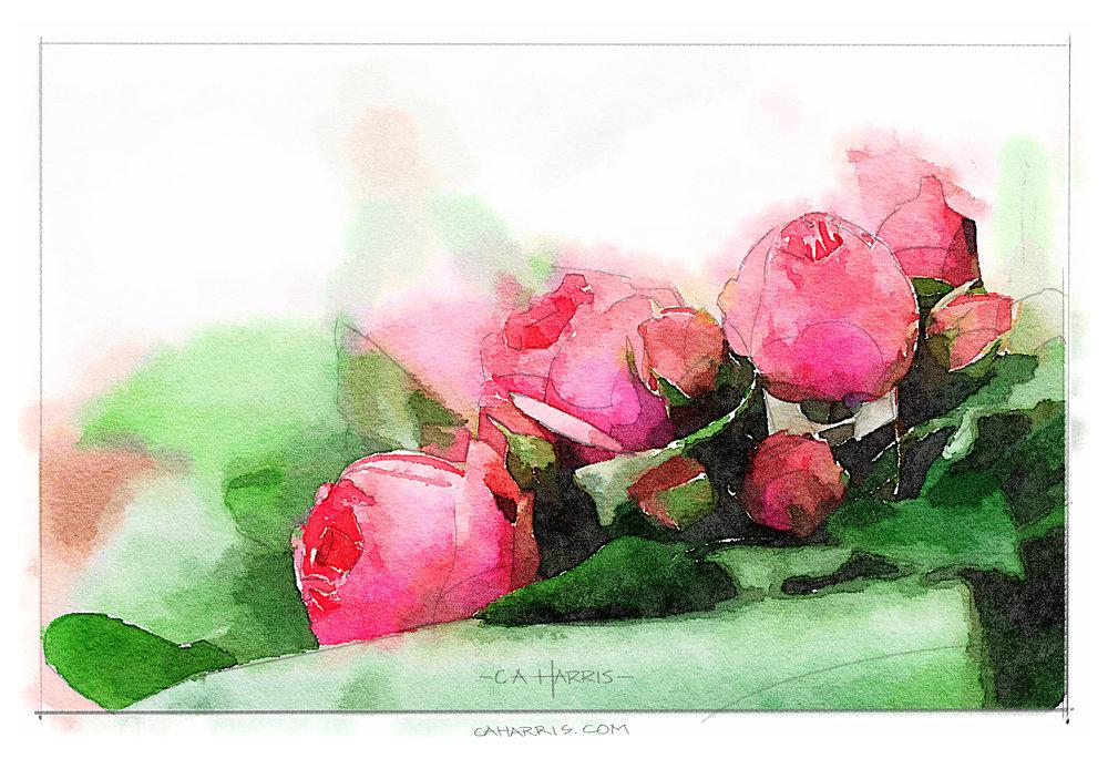 roses-1600.jpg