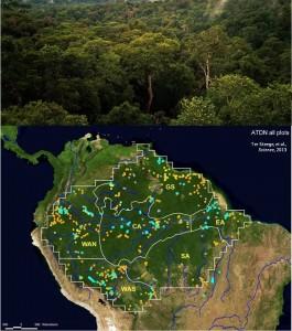 Arriba: Dosel de la selva amazónica cerca de Manaus, Brasil (Wikimedia Commons). Abajo: Mapa del artículo original que señala los puntos de muestreo usados en el estudio.