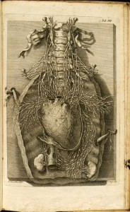 Corazón de principios del siglo 18 y sus nervios, dibujados por Niccolo Ricciolini (Tumblr).