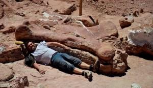 uno de los investigadores del MEF junto al gigantesco femur. Imagen tomada del Museo Efidio Feriglio (MEF).