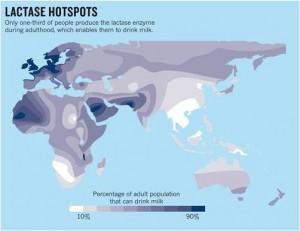 Frecuencias de la persistencia de la lactasa. Mapa realizado por Leonardi y colegas y publicado en el International Dairy Journal