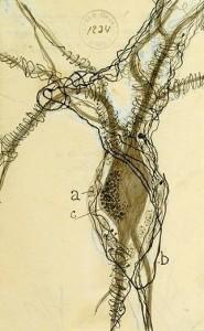Dibujo de una neurona por Santiago Ramón y Cajal. (Tomada de:  http://www.smithsonianmag.com)