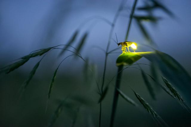 Foto: Radim Schreiber / FireflyExperience.com