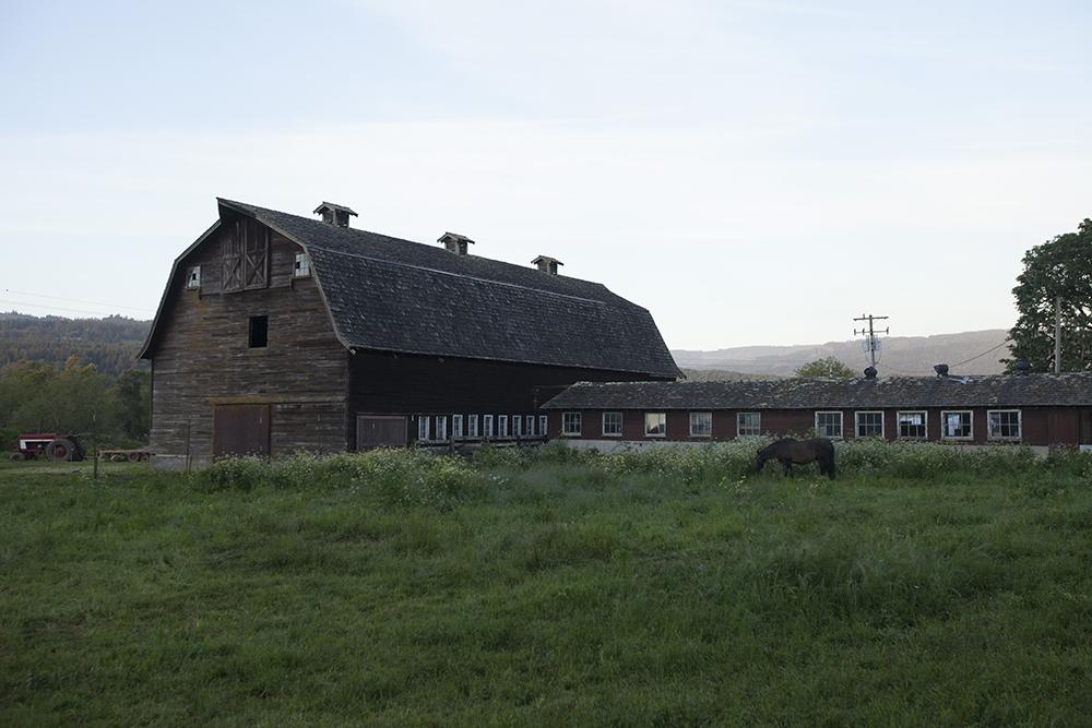 Farm SM.jpg