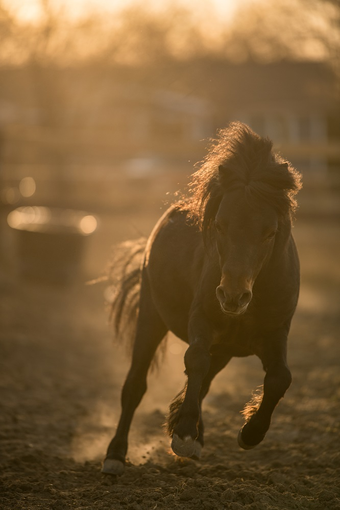 Tyler Harney Photography Horse Running in Pasture Nikon 200mm (1)
