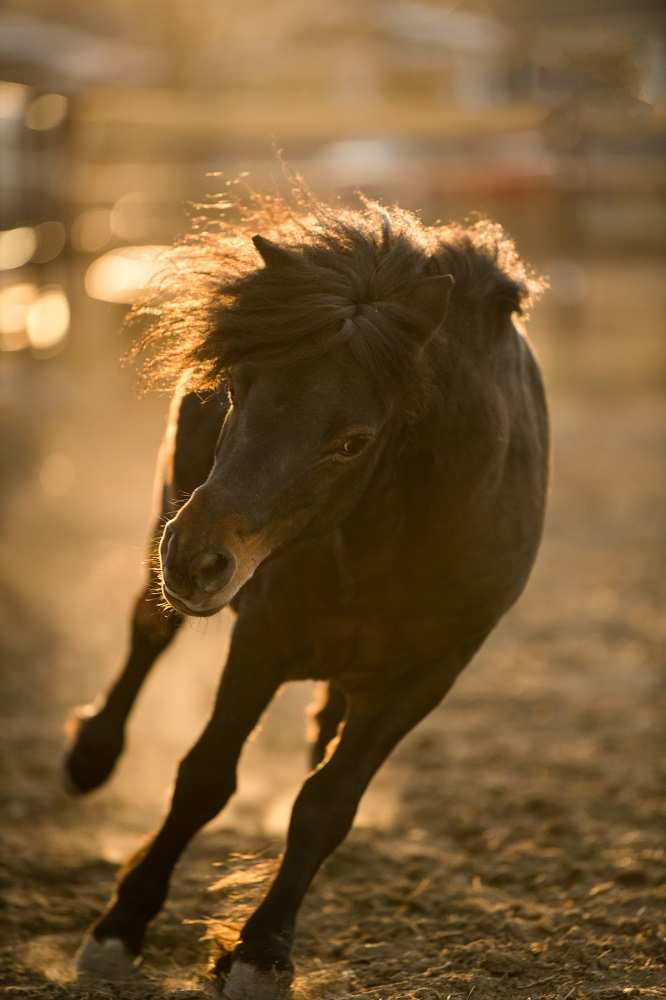 Tyler Harney Photography Horse Running in Pasture Nikon 200mm.jpg