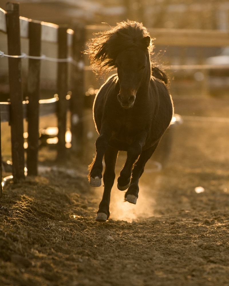 _Tyler Harney Photography Horse Running in Pasture Nikon 200mm (2)