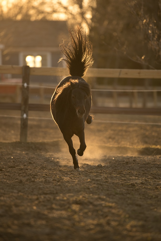 Tyler Harney Photography Horse Running in Pasture Nikon 200mm (3)