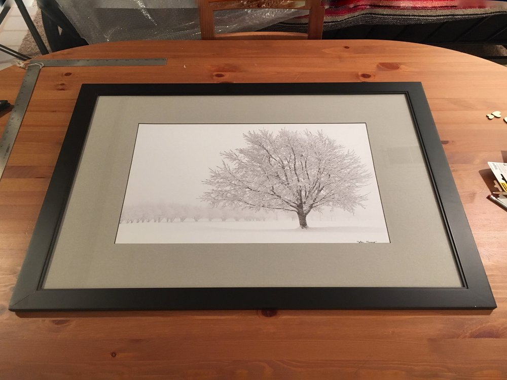 snowtree-tyler harney.jpg