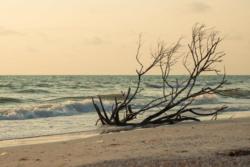 Tyler Harney Beach Tampa