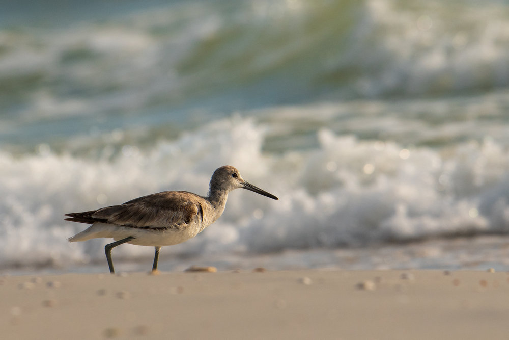 Tyler Harney Tampa Trip Beach Bird.jpg