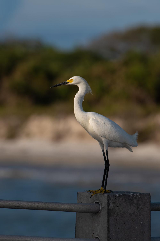 Bird 21.jpg