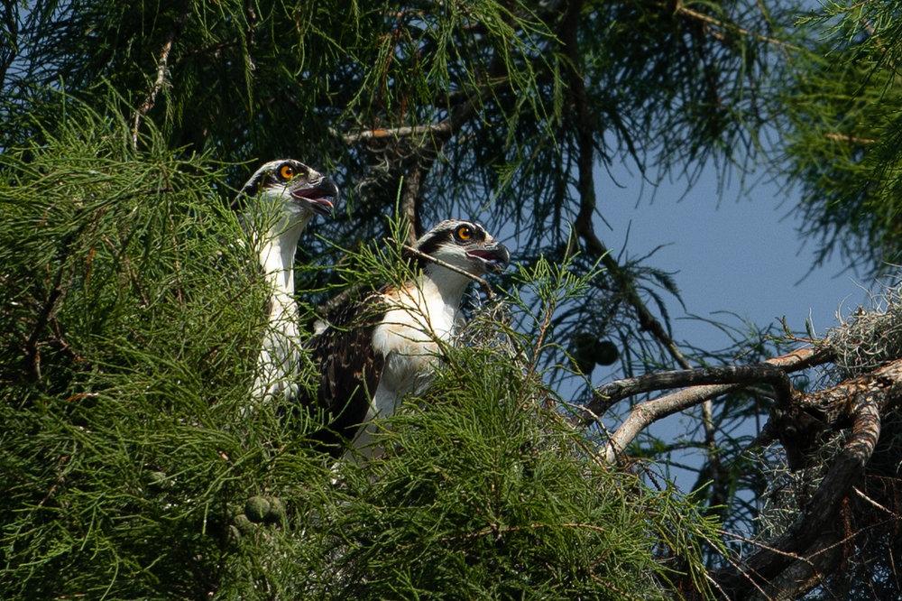 Birds Tree.jpg