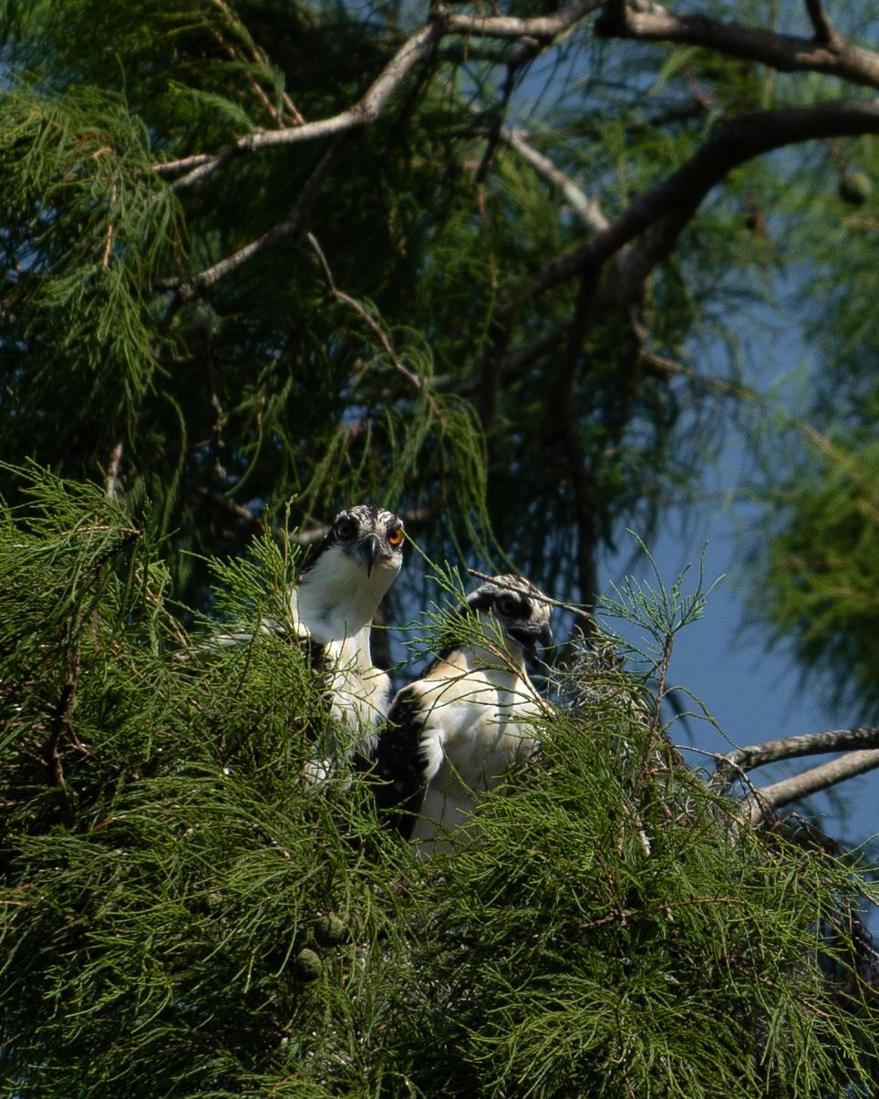 Birds Tree-2.jpg