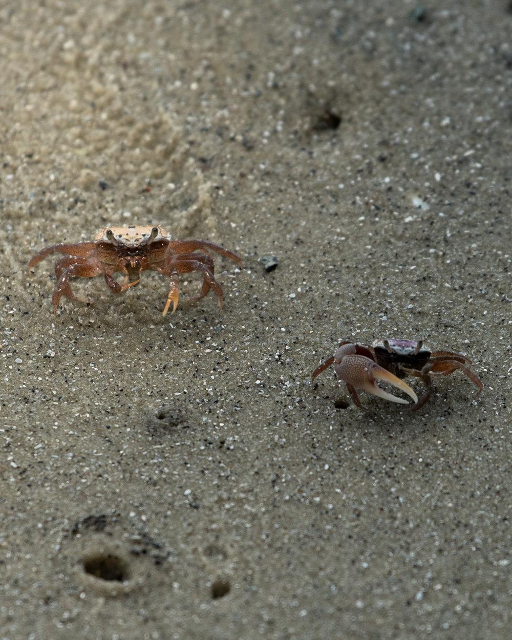 florida crabs.jpg
