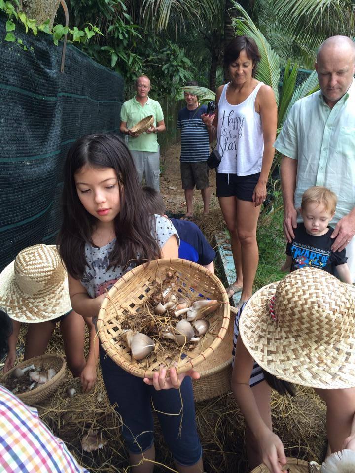 coconut hut ben tre