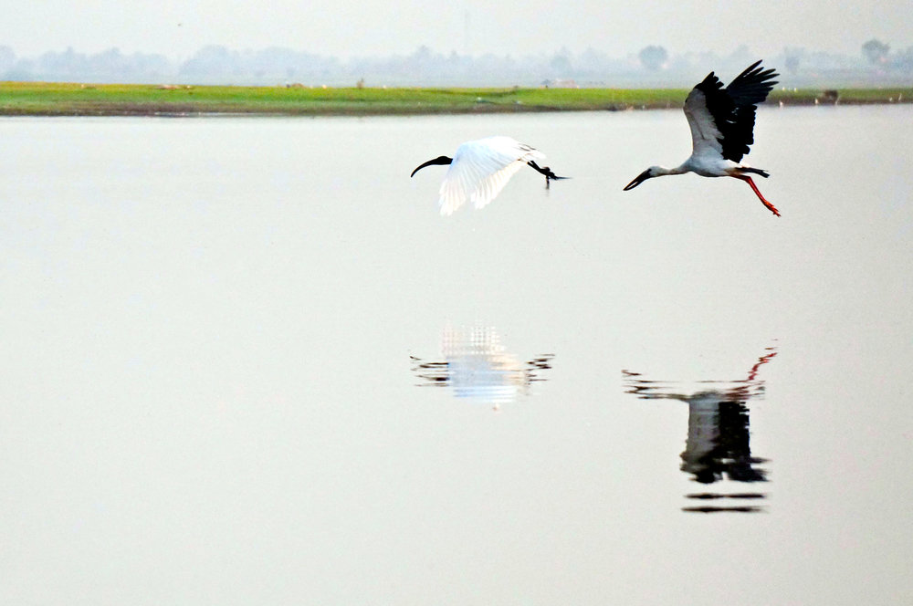(L-R) Black-Headed Ibis and Open-Billed Stork