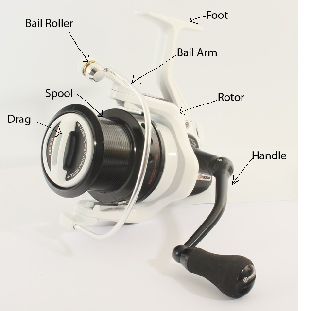 The Anatomy Of A Spinning Reel Just Add Water Fishing Tackle
