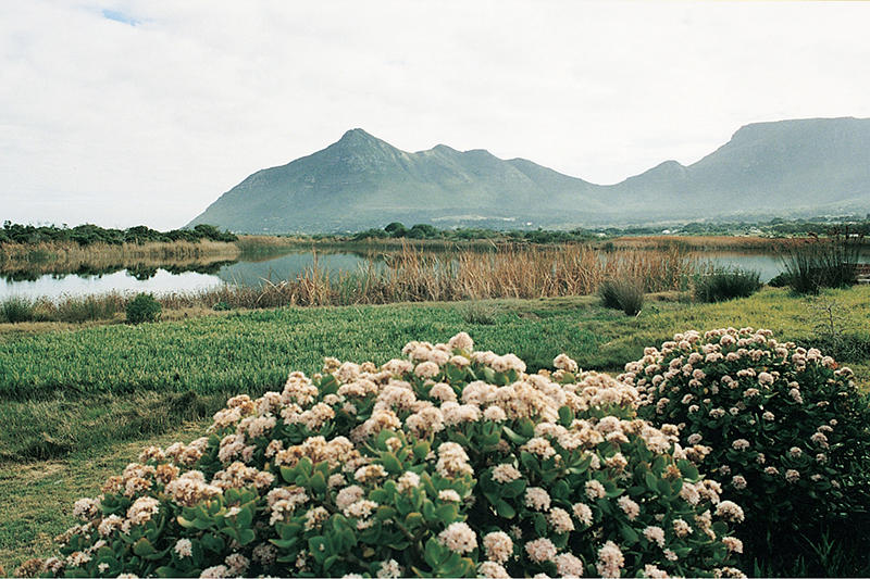 The Lakes enjoys fabulous views of Chapman's Peak, the Silvermine Mountain range and the unspoilt rural tranquility, while being only 30mins away from the hub of Cape Town and the Waterfront.    Two kilometres down the road from the House at Pooh Corner is the Noordhoek Lakes, a conservancy estate, built around the Noordhoek wetlands. Little Swan offers its visitors luxury accommodation in tranquil and secure surroundings – a holiday to remember in one of Cape Town's most treasured destinations.