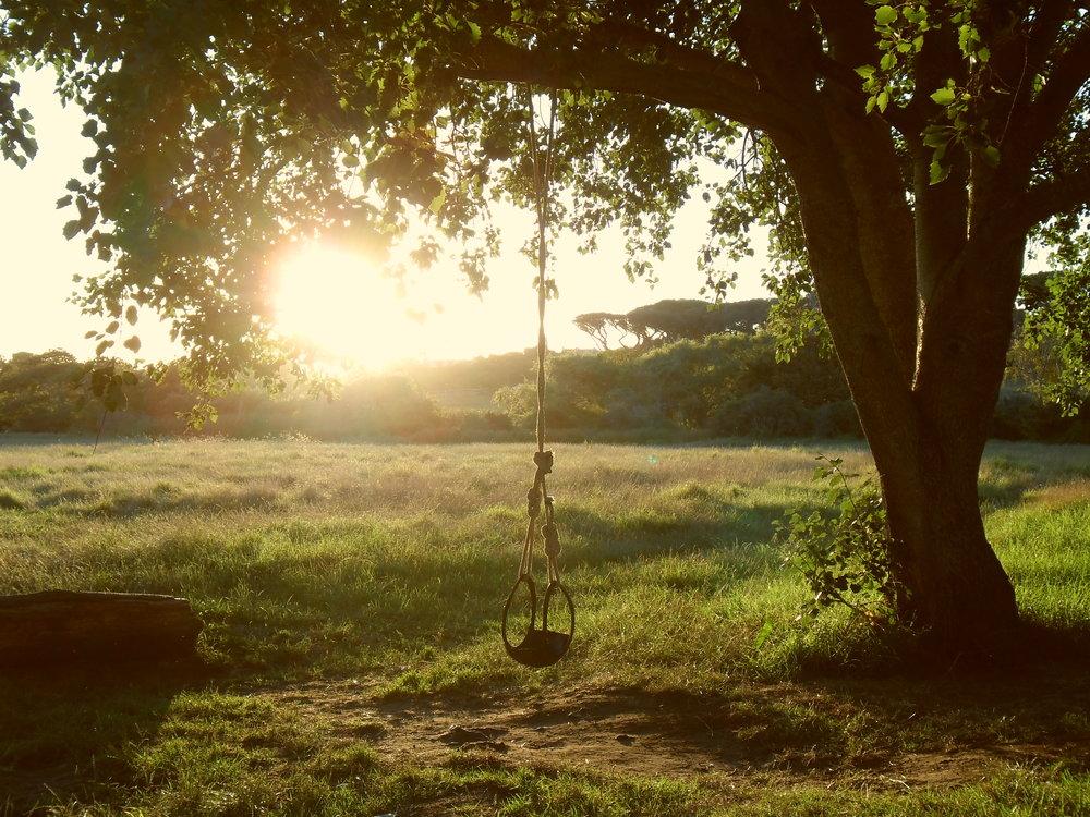 picniccommon02.jpg