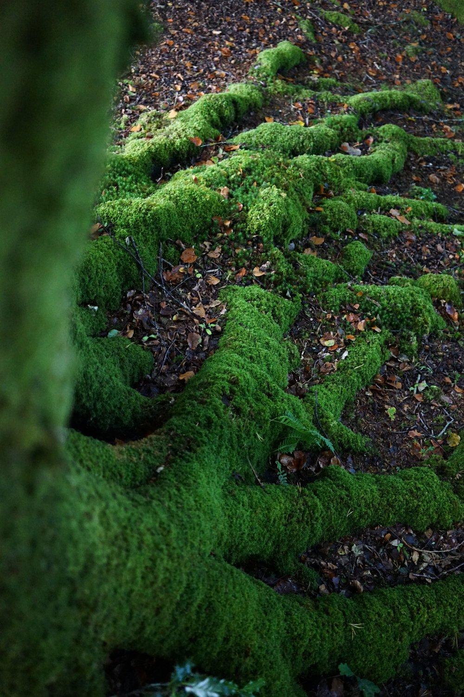มอสเขียวๆเกาะเต็มต้นไม้ สวยมาก