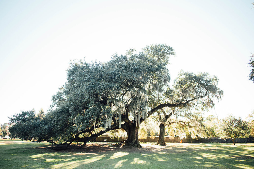 Lisa + Rock-Tree-of-Life-New-Orleans-Audubon-Park-Elopement_Print_0003.jpg
