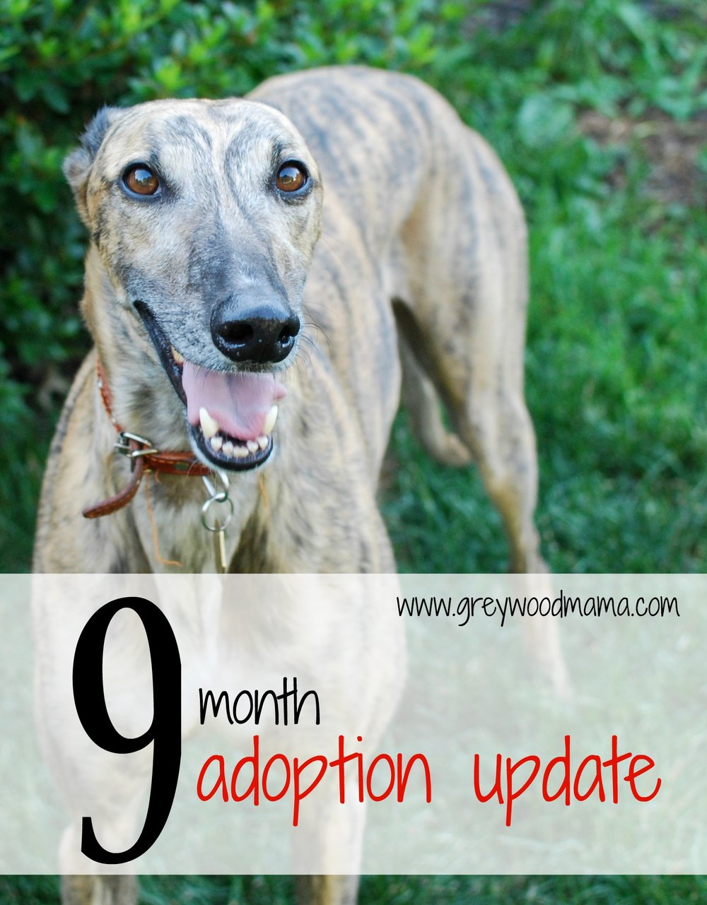 9month_adoption update