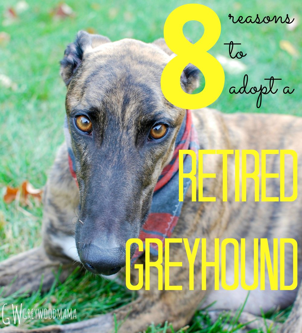 8-reasons-to-adopt-a-retired-greyhound_pin.jpg
