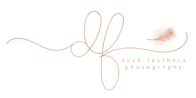 Duck Feathers Photography