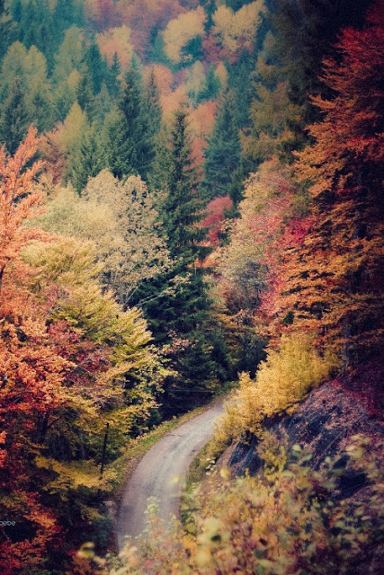 27_ autumn inspiration deux habituallychic