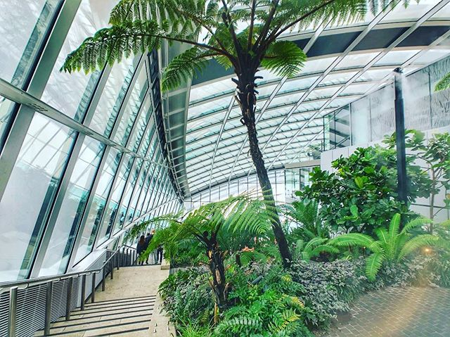 It was a cloudy morning - but, Sky Garden in #London is free, despite needing a reservation, and definitely worth a stop!