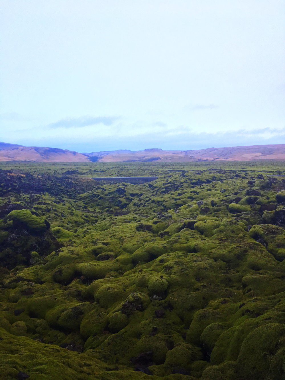 Moss grows on lava rocks along Iceland's Ring Road in Skaftarhreppur.