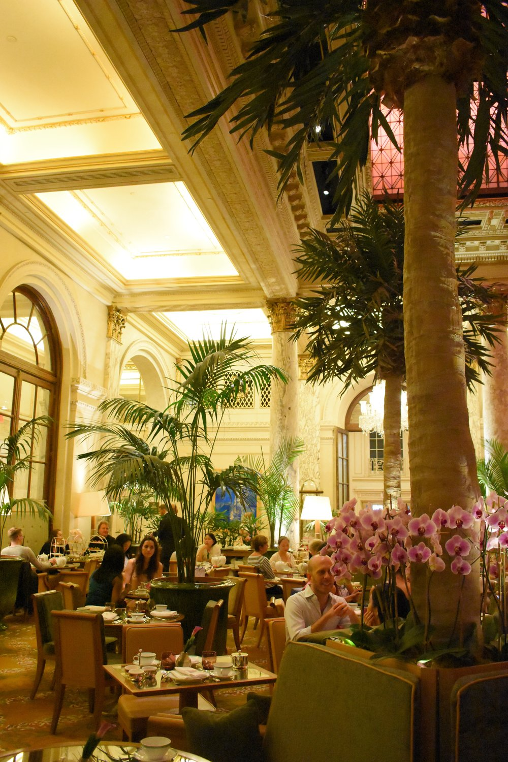 A view of the palms at the Palm Court.