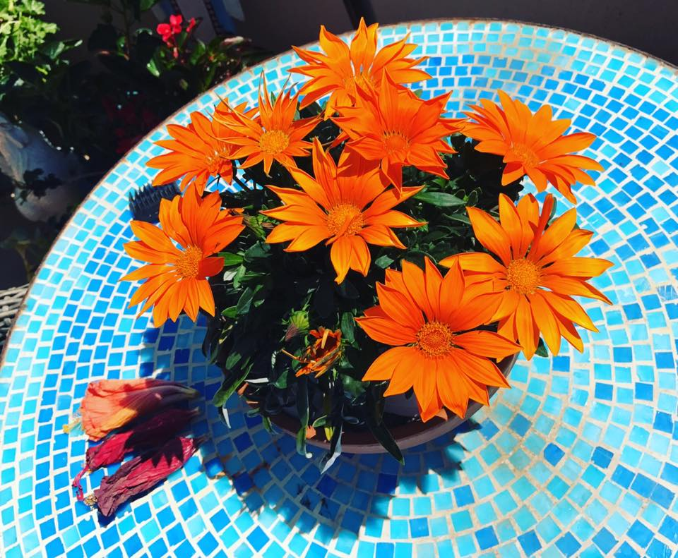 This morning I woke up to my orange daisies blooming on fire. I love them so much. They brought joy to my day and I wanted to share them with you.