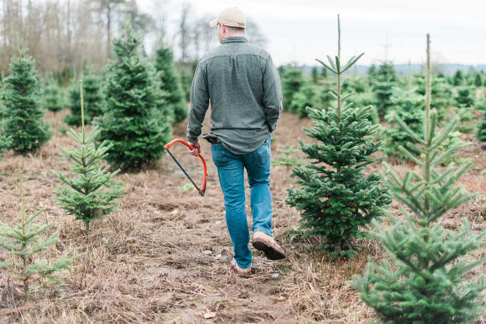 Brooke Summers Photography | The Great Christmas Tree Hunt