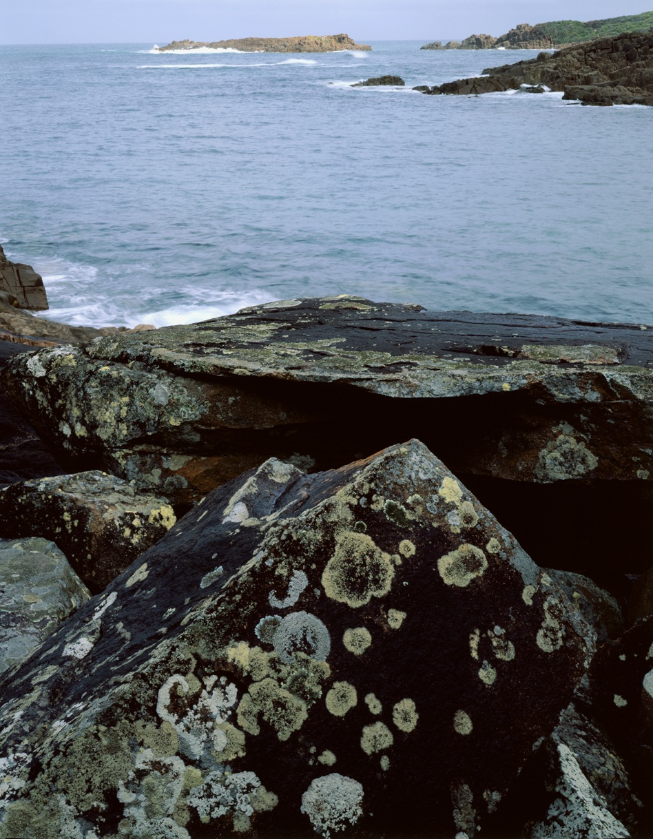 Tomaree lichen on rocks n island.jpg