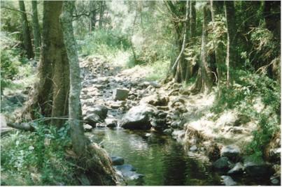 Small Stream.jpg