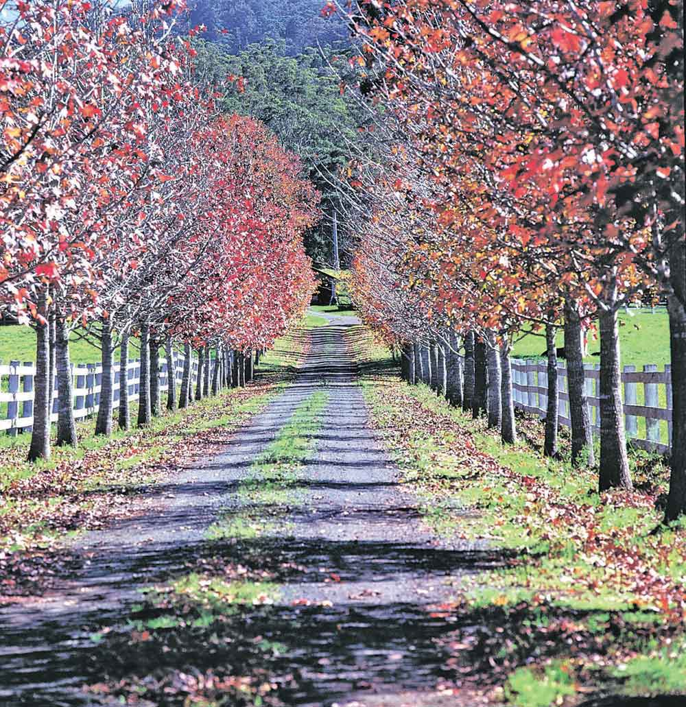 Autumn-Road-Yarramalong---Hinterland.jpg
