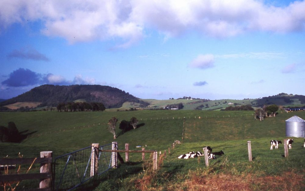 Comboyne Dairy Farm.jpg