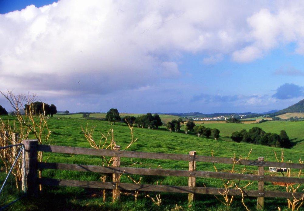 Comboyne Rural.jpg