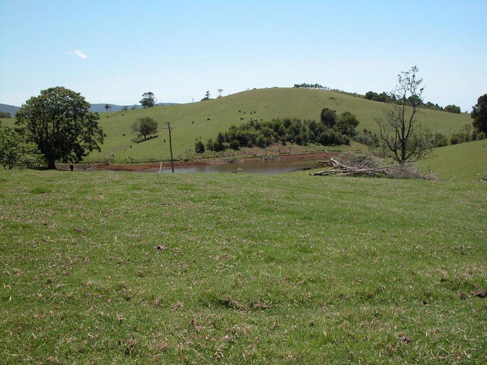 Dorrigo Farm.JPG